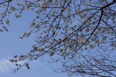 flores y cielo Imagen de archivo libre de regalías