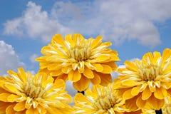 Flores y cielo amarillos. Imagen de archivo libre de regalías