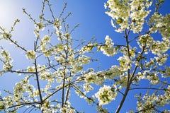 Flores y cielo azul Imagen de archivo libre de regalías