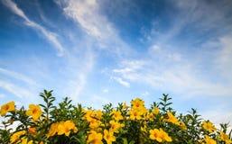 Flores y cielo azul Fotografía de archivo