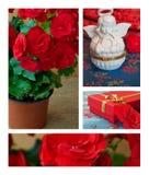 Flores y colección de las decoraciones Fotografía de archivo