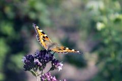 Flores y colmenas de la mariposa Foto de archivo