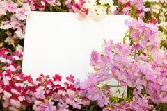 Flores y Copyspace Imagen de archivo