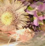 Flores y embalaje blanco Imágenes de archivo libres de regalías