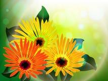 Flores y extracto de la luz Imagenes de archivo