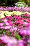 Flores y floras hermosas Fotos de archivo libres de regalías