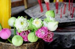 Flores y flores de loto Foto de archivo libre de regalías