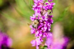 Flores y flores del bosque en primavera Fotos de archivo
