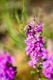 Flores y flores del bosque en primavera Foto de archivo