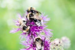 Flores y flores del bosque en primavera Imagen de archivo libre de regalías