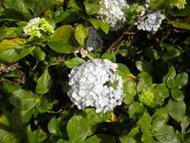 Flores y fondo blancos del color imagen de archivo