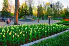 Flores y fuente de los tulipanes en Druskininkai imagenes de archivo
