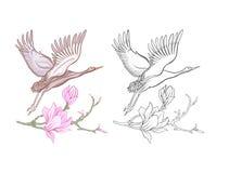 Flores y grúa Sistema del dibujo coloreado de la muestra y de esquema Imágenes de archivo libres de regalías