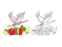 Flores y grúa Sistema del dibujo coloreado de la muestra y de esquema Foto de archivo
