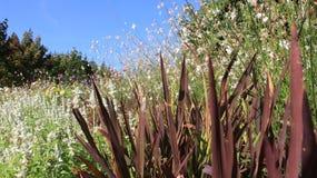 Flores y grupo florecientes de arroz joven fotos de archivo