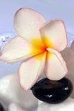 Flores y guijarros de Frangipane en un tazón de fuente de cristal Fotografía de archivo