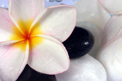 Flores y guijarros de Frangipane en un tazón de fuente de cristal Imágenes de archivo libres de regalías