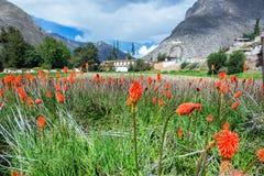 Flores y hacienda coloridas Imagen de archivo libre de regalías