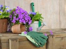 Flores y herramientas que cultivan un huerto Foto de archivo libre de regalías