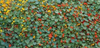 Flores y hojas Fotos de archivo libres de regalías