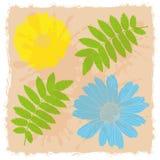 Flores y hojas Fotografía de archivo libre de regalías