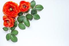 Flores y hojas Fotografía de archivo
