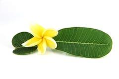 Flores y hojas amarillas del verde. Fotos de archivo libres de regalías