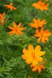 Flores y hojas amarillas hermosas del verde Fotografía de archivo