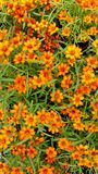 Flores y hojas anaranjadas del verde Fotos de archivo libres de regalías