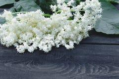 Flores y hojas blancas de la baya del saúco del jardín en un fondo de madera rústico Hay un lugar para su texto foto de archivo libre de regalías