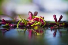 Flores y hojas coloridas en la superficie brillante mojada Foto de archivo