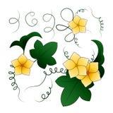 Flores y hojas de la calabaza, ejemplo del vector Imagenes de archivo