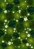 Flores y hojas del philodendron inconsútiles Fotos de archivo