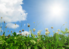 Flores y hojas en el cielo azul Imagen de archivo