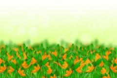 Flores y hojas fotos de archivo