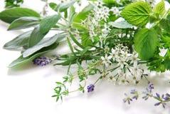Flores y hojas herbarias imagenes de archivo