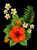 Flores y hojas hermosas Fondo tropical del verano Foto de archivo
