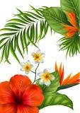 Flores y hojas hermosas Fondo tropical del verano Fotos de archivo