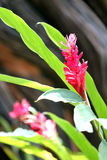 Flores y hojas rojas del verde. Imagen de archivo