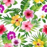 Flores y hojas tropicales en el fondo blanco inconsútil Vector stock de ilustración