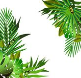 Flores y hojas tropicales sobre blanco libre illustration