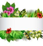Flores y hojas tropicales sobre blanco stock de ilustración