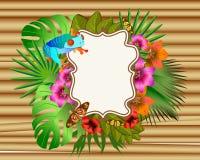 Flores y hojas tropicales y mariposa y rana hermosas, Br Foto de archivo libre de regalías