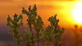 Flores y hormiga amarillas en la salida del sol metrajes