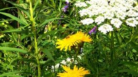 Flores y hormigas Imágenes de archivo libres de regalías