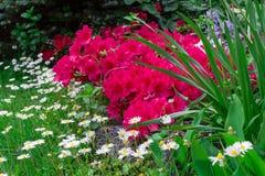 Flores y jardines Fotos de archivo