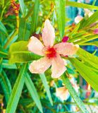 Flores y la lluvia fotos de archivo libres de regalías