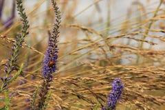 Flores y ladybug Imagen de archivo libre de regalías