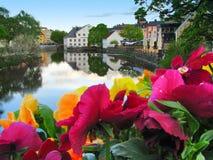 Flores y lago Foto de archivo libre de regalías