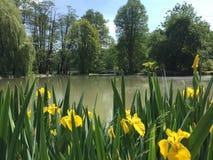 Flores y lago Imagen de archivo libre de regalías